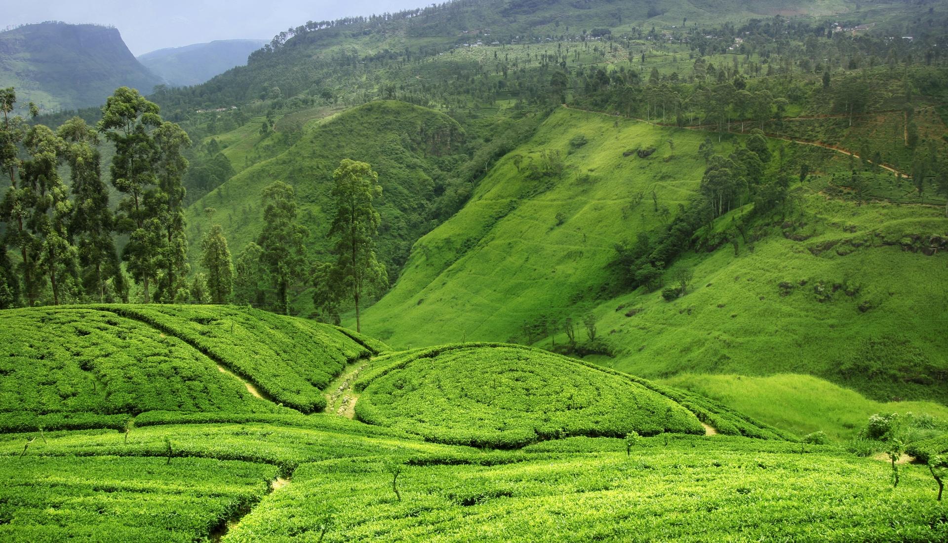O Melhor do Sri Lanka