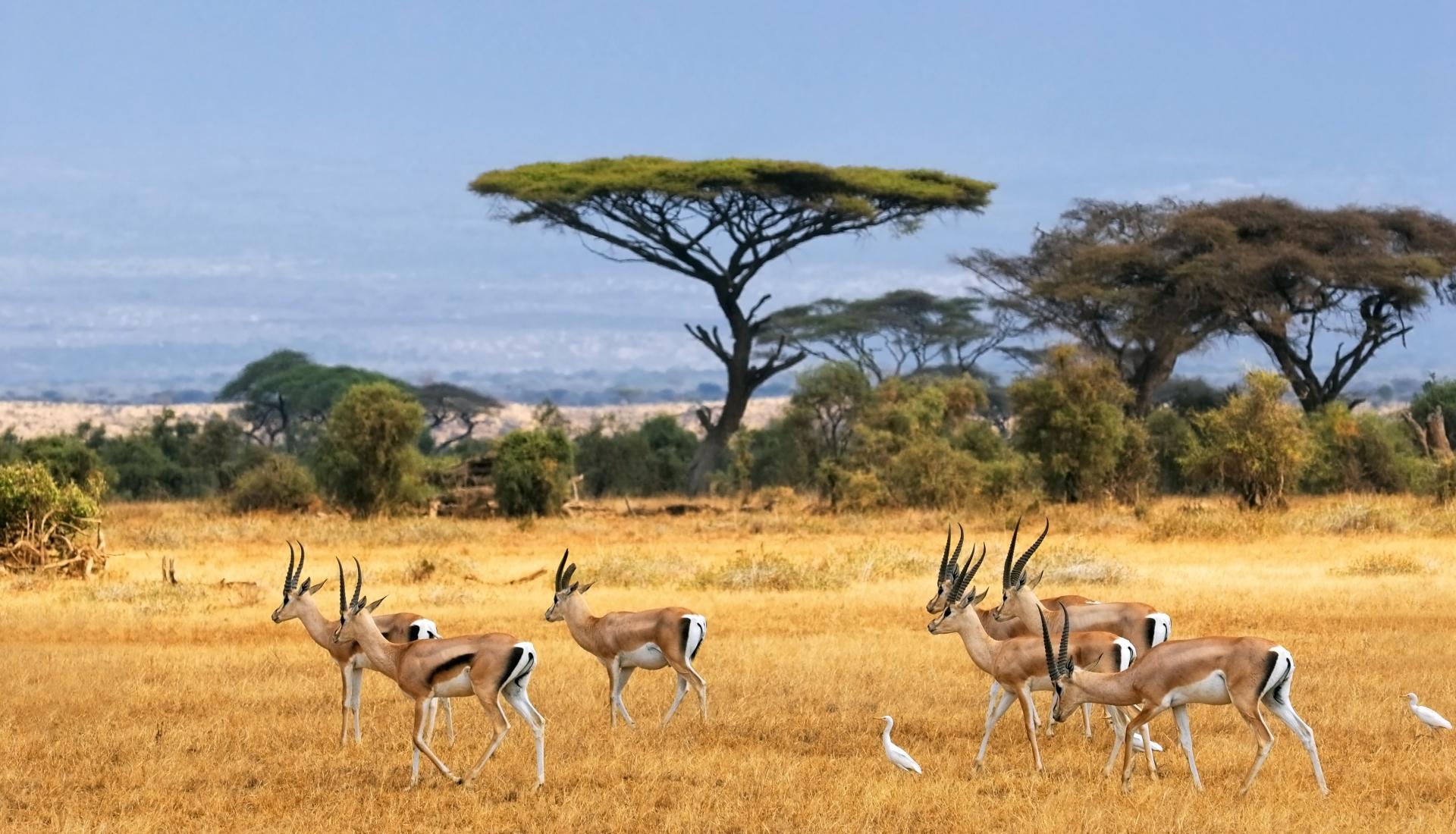 Quénia Clássico