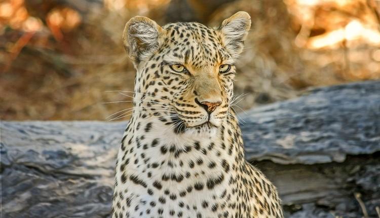 Delta do Okavango, Kalahari e Cataratas Vitória