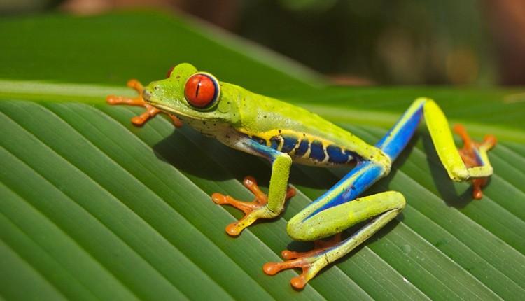 Costa Rica - Parques, Vulcões e Relax