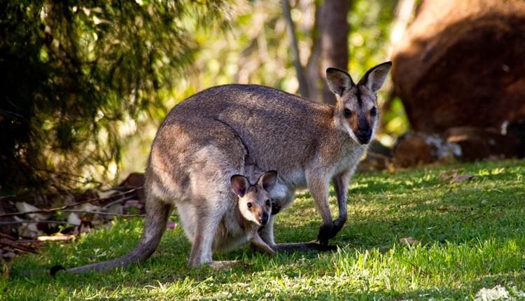 Austrália Essencial