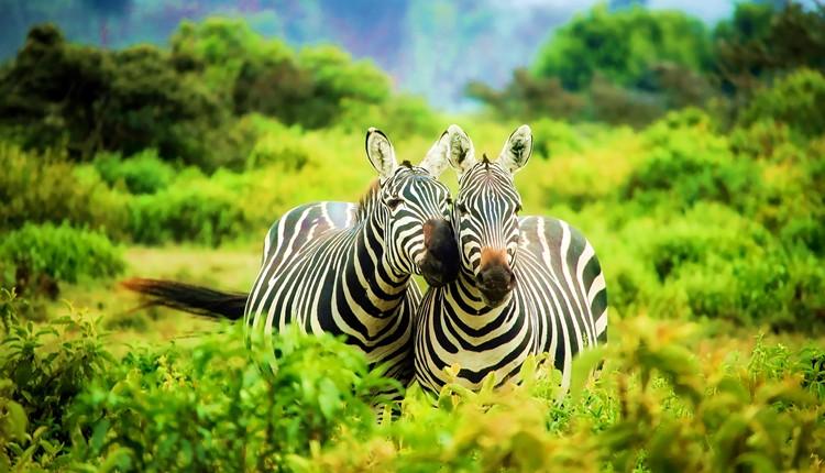 Quénia - Safari Maasai