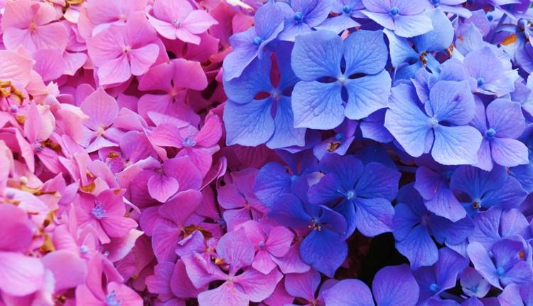 Flores e Terceira