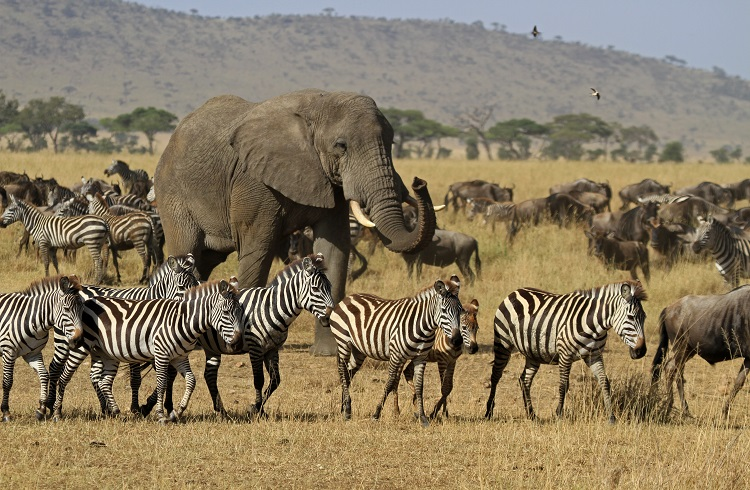 /optitravel/online/www/layout22/single_product.php?pkt_id=1018&Produto=Safari Fly in Serengeti & Zanzibar&destino=TANZÂNIA