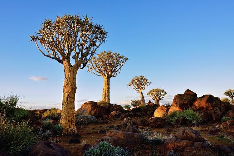 /optitravel/online/www/layout22/single_product.php?pkt_id=1035&Produto=Kruger Express & Deserto da Namíbia&destino=ÁFRICA DO SUL