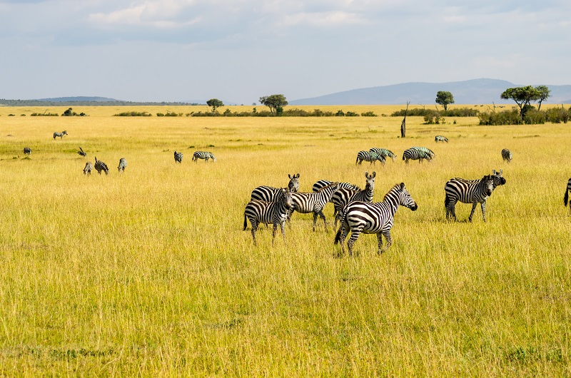 /optitravel/online/www/layout22/single_product.php?pkt_id=81&Produto=Safari Rift Valley - Keekorok & Nakuru Lodges (Opç. 3)&destino=QUÉNIA
