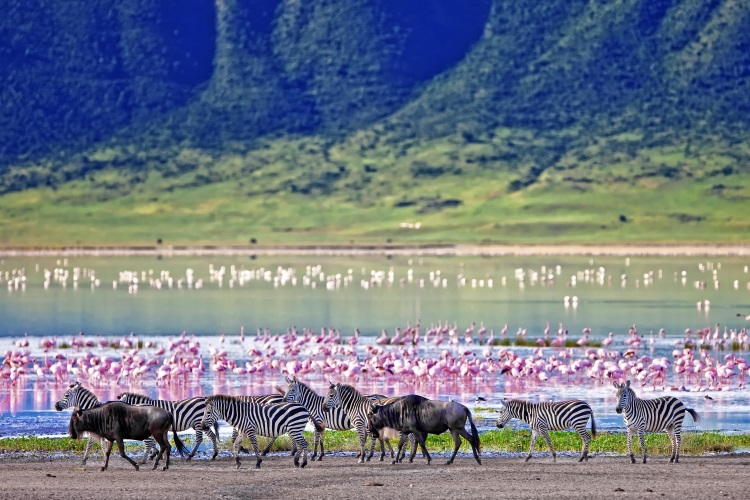 /optitravel/online/www/layout22/single_product.php?pkt_id=119&Produto=Safari Ngorongoro Rota 1 - Exclusivo&destino=TANZÂNIA