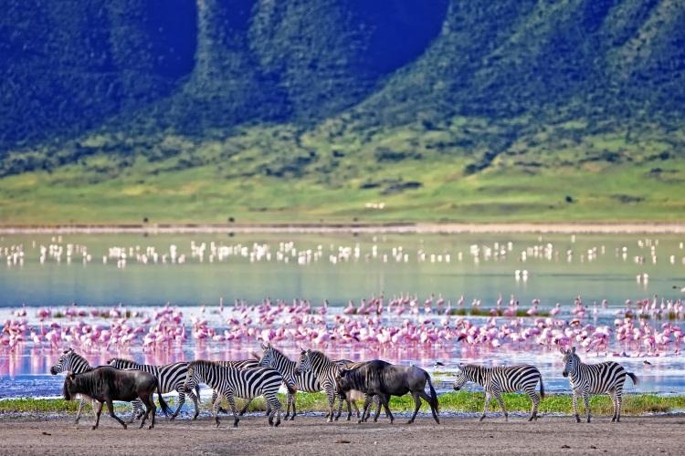 /optitravel/online/www/layout22/single_product.php?pkt_id=124&Produto=Safari Ngorongoro Rota 1 - Privado & Zanzibar&destino=TANZÂNIA