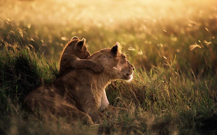 /optitravel/online/www/layout22/single_product.php?pkt_id=125&Produto=Safari Ngorongoro Rota 2 - Cat. A & Zanzibar&destino=TANZÂNIA