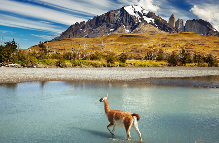 /optitravel/online/www/layout22/single_product.php?pkt_id=152&Produto=Patagónia Chilena & Torres del Paine&destino=CHILE