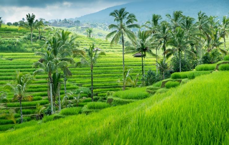 /optitravel/online/www/layout22/single_product.php?pkt_id=205&Produto=Bali Sul, Ubud & Lombok&destino=INDONÉSIA