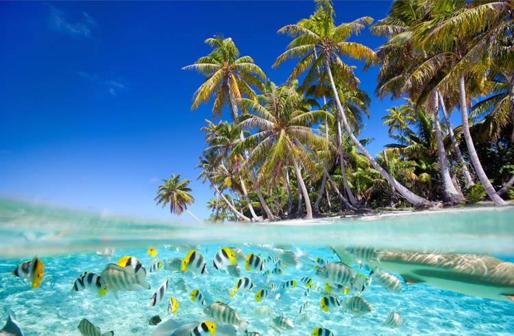 /optitravel/online/www/layout22/single_product.php?pkt_id=208&Produto=Maldivas - Tudo Incluído&destino=MALDIVAS