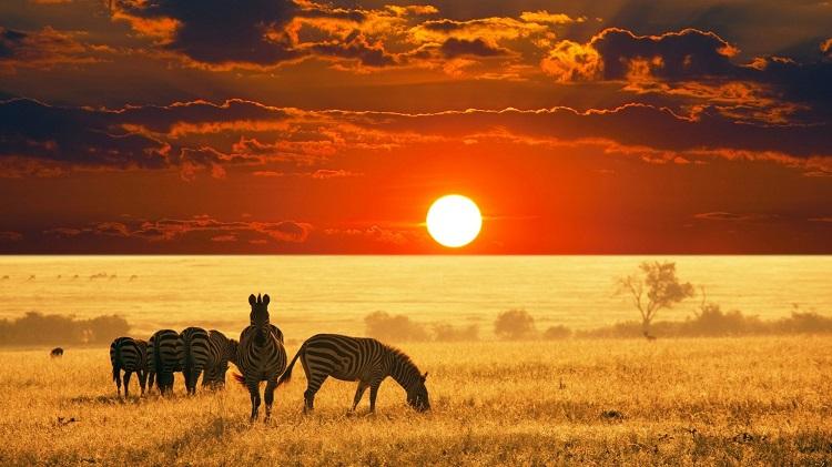 /optitravel/online/www/layout22/single_product.php?pkt_id=229&Produto=Kruger & Cataratas Vitória (Zimbábue)&destino=ÁFRICA DO SUL
