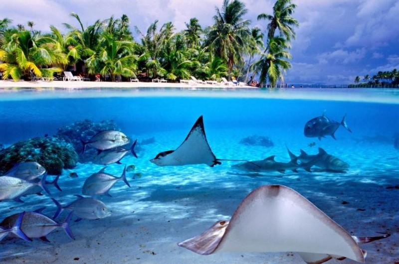 /optitravel/online/www/layout22/single_product.php?pkt_id=975&Produto=Tahiti & Bora Bora&destino=POLINÉSIA FRANCESA