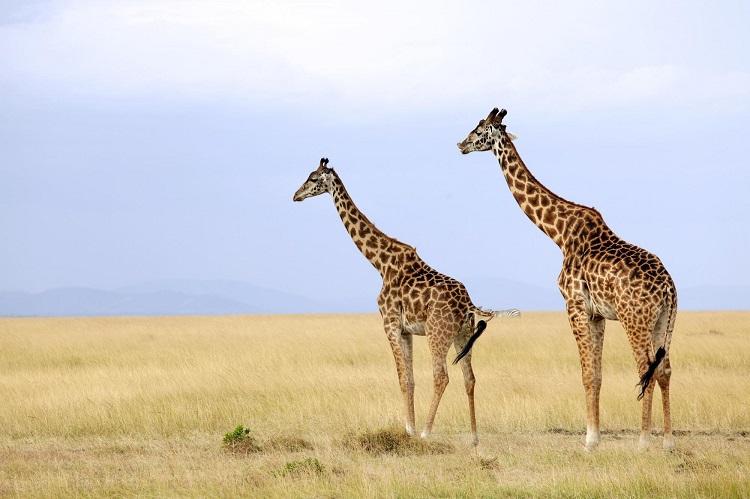 Quénia Amani - Datas Promocionais