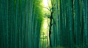 /optitravel/online/www/layout22/single_product.php?pkt_id=96&Produto=Japão Clássico&destino=JAPÃO